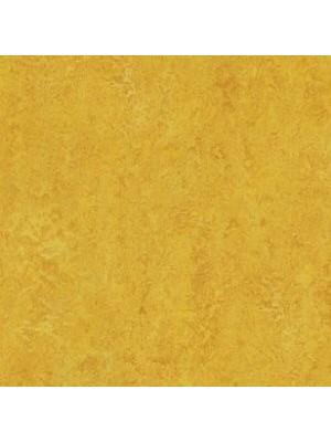 wmr3225-2,5 Forbo Marmoleum Linoleum dandelion Real Naturboden