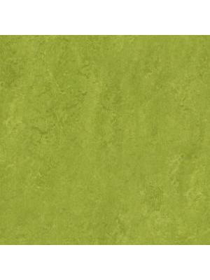 wmr3247-2,5 Forbo Marmoleum Linoleum green Real Naturboden